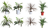 Plants decorative — Stock Photo