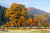 Beautiful autumn landscape — Stock Photo