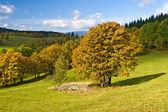 Autumn colors — Stockfoto