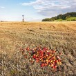 Harvested autumn fields - Stock Photo