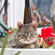 Kitten resting on Christmas decorated window — Stock Photo