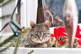 Kitten resting on Christmas decorated window — Stock Photo