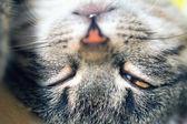 Cat's head turned upside down — Stockfoto