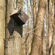 Stock Photo: Destroyed birdhouse in a tree