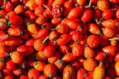 Healthy autumn fruits - rose hips — Stock Photo