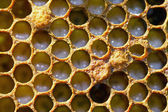 Unsealed honeycomb with small larvae of bees — Stock Photo