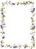 Purple ginger and white sky flower vine border isolated on white background — Stock Photo