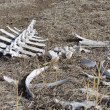 White Backbone and Assortment of Bones in the Wild - Stock Photo
