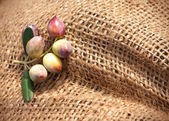 A fragment of a knotted sack with olives — Stock Photo