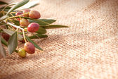 A branch of olives on sack cloth — Stock Photo