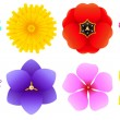Different Kinds of Flowers - Top View — Stock Vector