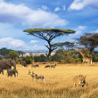 Safari in Africa, collage - Stock Photo