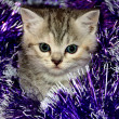 Striped kitten plays with Christmas tinsel — Zdjęcie stockowe