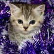 Striped kitten plays with Christmas tinsel — Stok fotoğraf