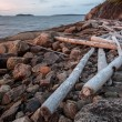 Old logs beached sea — Stock Photo