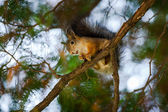 Squirrel sits on a tree — Stock Photo