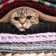 Stock Photo: Pile of woolen clothes