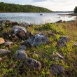 Stones and grass on the shore of the White Sea — Stock Photo