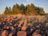 A pile of stones and group of trees — Stockfoto