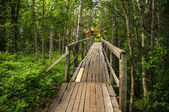 Old bridge through the forest. — Stock Photo