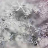 Real macro snowflakes — Стоковое фото