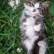 Kitten lying on the grass in the back — Stock Photo