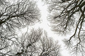 Isolated snowy tree branches — 图库照片