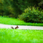 Squirrel eats a nut in profile — Stock Photo