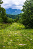 Road disappearing into the mountains of Abkhazia — Stock Photo