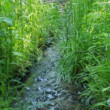 Small and fast creek in wood - Stock Photo