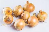 Süßorangen reiffrische Zwiebel — Stockfoto