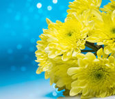 Flowers over blue bokeh background — Stock Photo