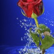 Underwater red rose surrounded by bubbles. — Stock Photo
