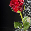 Underwater red rose. — Stock Photo