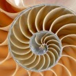 Nautilus — Stock Photo