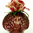 Rose with seashell — Stock Photo