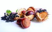 Fruits in autumn — Stock Photo