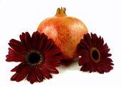 Gerbera and pomegranate — Stock Photo