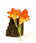 Orange gladiolus — Stock Photo