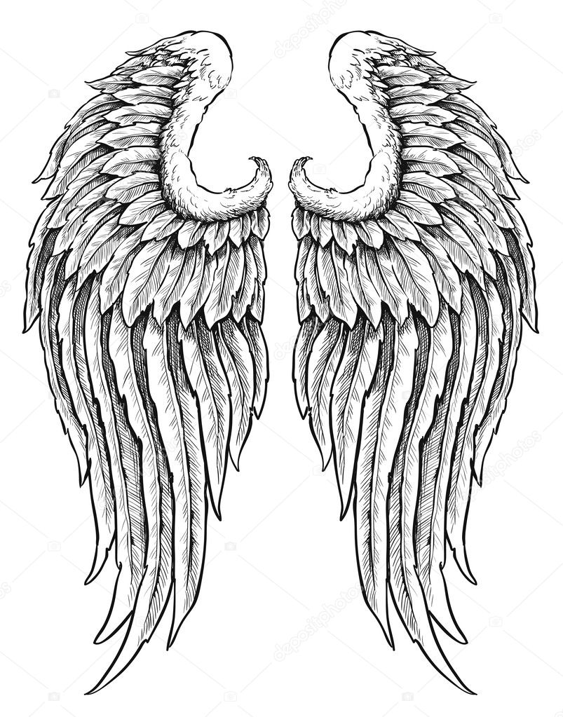 Hand drawn angel wings  Eagle Wings Drawing