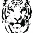 Stock Vector: Tiger Stencil Vector