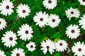White beautiful flowers — Stockfoto