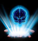 Hands holding brain — Stock Photo