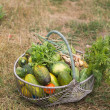 Foto Stock: Basket with vegetables and greenery