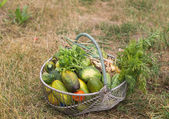 Basket with vegetables and greenery — Stock Photo