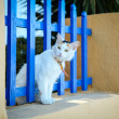 White homeless cat is peeking through the fence onthe street - Stock Photo