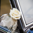 White rose - Foto Stock