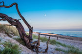 Crooked tree on the beach — Stock Photo