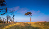 Dune with crooked tree — Stock Photo