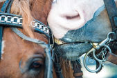 Close up of a horses snout — Stock Photo